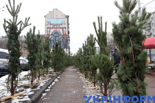 Christmas trees sold at street market of Kyiv